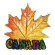 CDA Magnet>Maple Leaf Fall Color